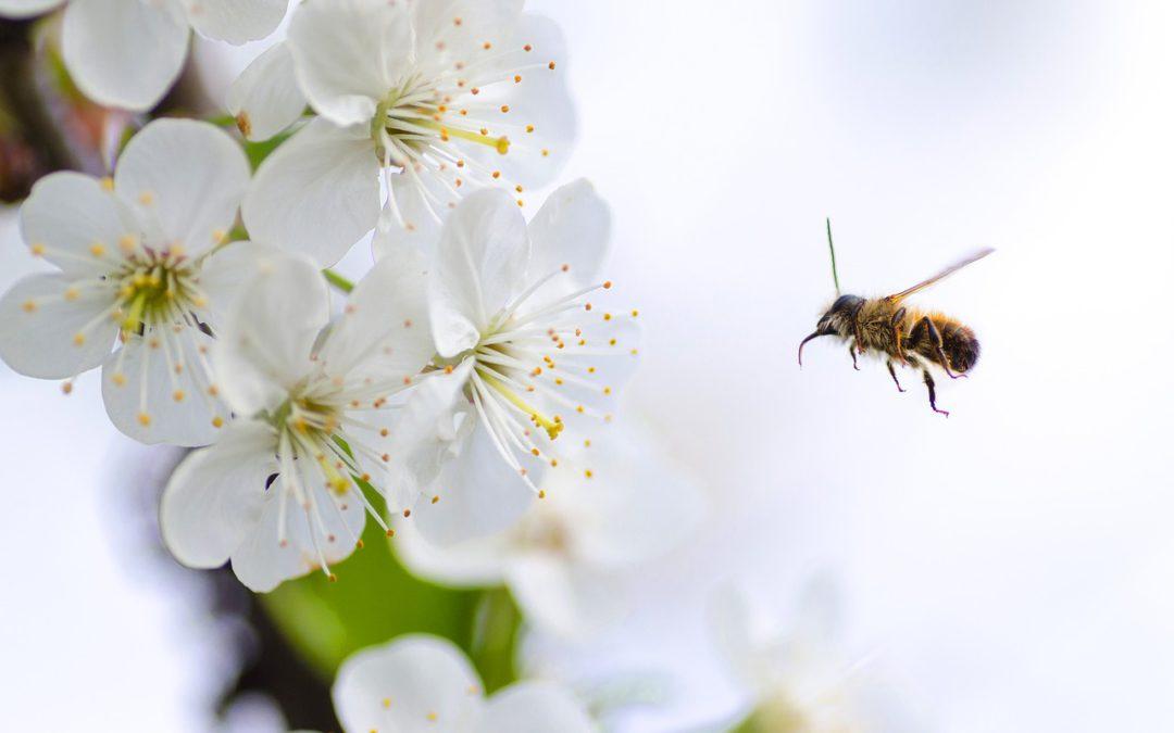 Die Blume kommt nicht zur Biene